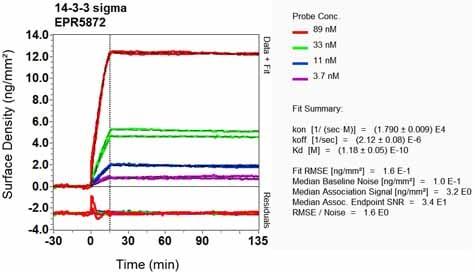 OI-RD Scanning - Anti-14-3-3 antibody [EPR5872] (ab133538)