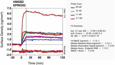 Other - Anti-HMGB2 antibody [EPR6302] (ab133540)