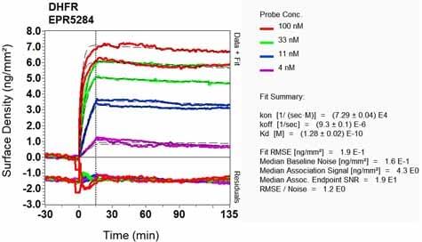 Other - Anti-Dihydrofolate reductase (DHFR) antibody [EPR5284] (ab133546)