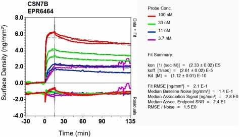 Other - Anti-CSN7b antibody [EPR6464] (ab133548)