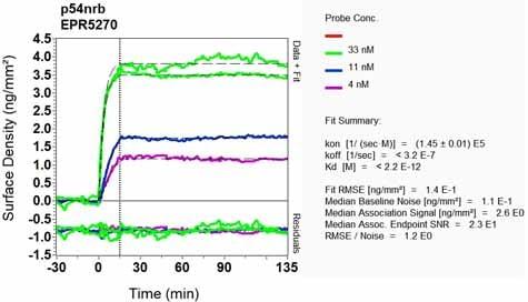 OI-RD Scanning - Anti-nmt55 / p54nrb antibody [EPR5270] (ab133574)