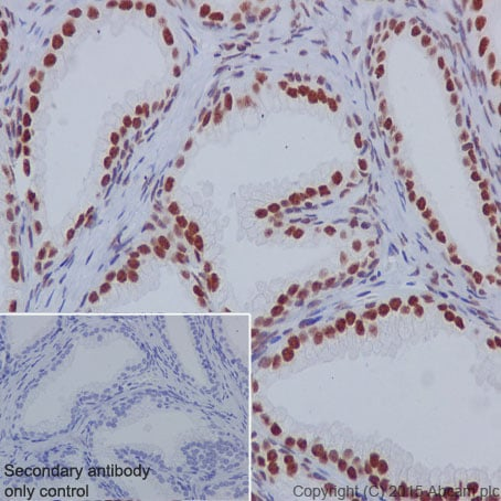 Immunohistochemistry (Formalin/PFA-fixed paraffin-embedded sections) - Anti-nmt55 / p54nrb antibody [EPR5270] (ab133574)