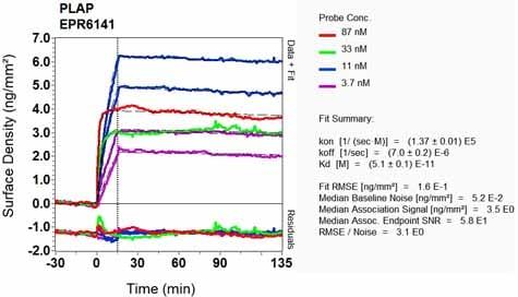 OI-RD Scanning - Anti-Placental alkaline phosphatase (PLAP) antibody [EPR6141] (ab133602)