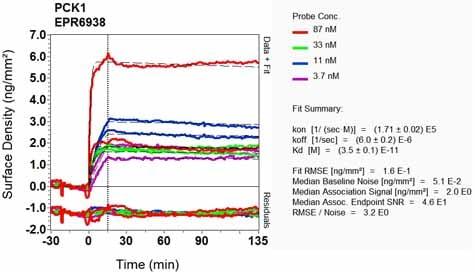 Other - Anti-PCK1/PEPC antibody [EPR6938] (ab133603)