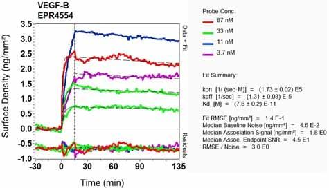OI-RD Scanning - Anti-VEGFB antibody [EPR4554] (ab133606)