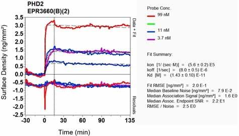 Other - Anti-PHD2 / prolyl hydroxylase antibody [EPR3660(B)(2)] (ab133630)