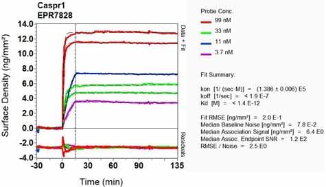 Other - Anti-Caspr antibody [EPR7828] (ab133634)