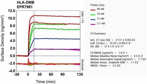 Other - Anti-HLA DMB antibody [EPR7981] (ab133640)