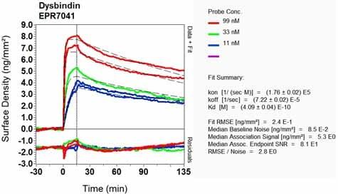 Other - Anti-Dysbindin antibody [EPR7041] (ab133652)
