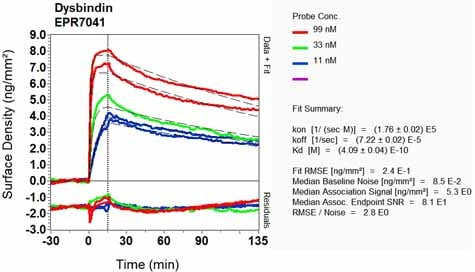 OI-RD Scanning - Anti-Dysbindin antibody [EPR7041] (ab133652)