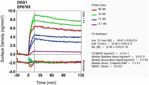OI-RD Scanning - Anti-Desmoglein 1/DSG1 antibody [EP6765] (ab133662)