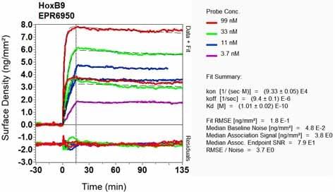 Other - Anti-HOXB9 antibody [EPR6950] (ab133701)