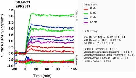 OI-RD Scanning - Anti-SNAP23 antibody [EPR8539] (ab133703)