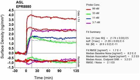 OI-RD Scanning - Anti-AGL/Alpha-glucosidase antibody [EPR8880] (ab133720)