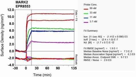 Other - Anti-MARK2 antibody [EPR8553] (ab133724)