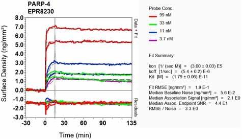 OI-RD Scanning - Anti-PARP4 antibody [EPR8230] (ab133745)