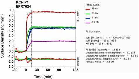 OI-RD Scanning - Anti-KCHIP1 antibody [EPR7624] (ab133753)