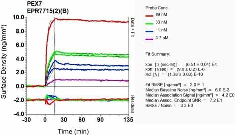 Other - Anti-PEX7 antibody [EPR7715(2)(B)] (ab133754)