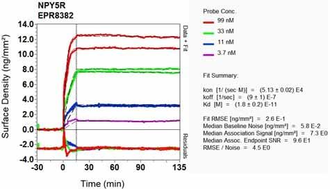 Other - Anti-NPY5R antibody [EPR8382] (ab133757)