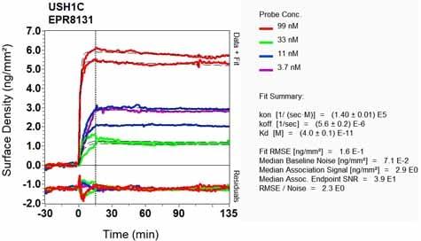 OI-RD Scanning - Anti-USH1C/Harmonin antibody [EPR8131] (ab133763)