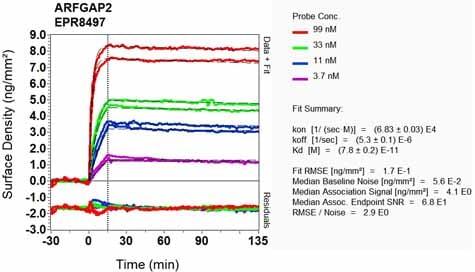 OI-RD Scanning - Anti-ARF GAP 2 antibody [EPR8497] (ab133768)