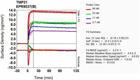 Other - Anti-TMP21 antibody [EPR9037(B)] (ab133771)