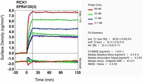 OI-RD Scanning - Anti-PICK1 antibody [EPR4130(3)] (ab133773)