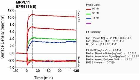 Other - Anti-Mitochondrial ribosomal protein L11 antibody [EPR9111(B)] (ab133789)
