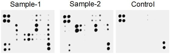 Typical results with Cytokine Arrays
