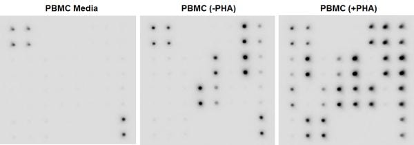 Multiplex Protein Detection - Human Cytokine Antibody Array - Membrane (23 Targets) (ab133996)