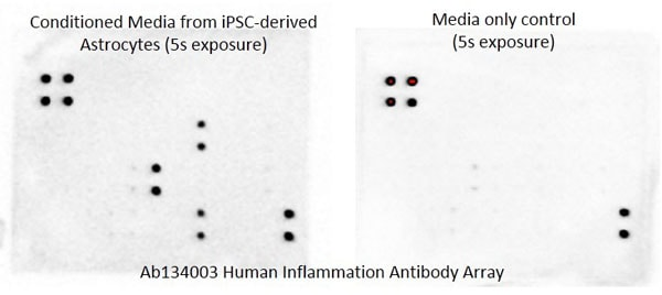 Multiplex Protein Detection - Human Inflammation Antibody Array - Membrane (40 Targets) (ab134003)