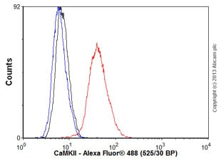 Flow Cytometry - Anti-CaMKII antibody [EPR6686(2)] (ab134041)