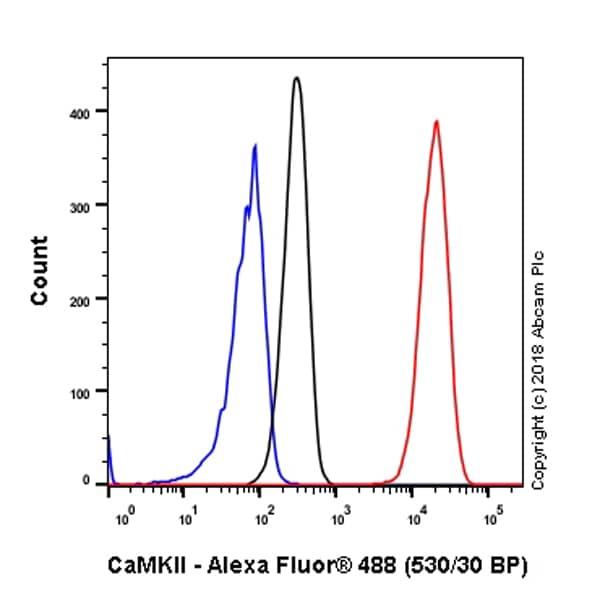 Flow Cytometry (Intracellular) - Anti-CaMKII antibody [EPR6686(2)] (ab134041)