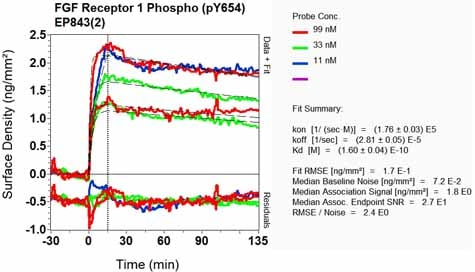 OI-RD Scanning - Anti-FGFR1 alpha (phospho Y654) antibody [EP843(2)] (ab134043)