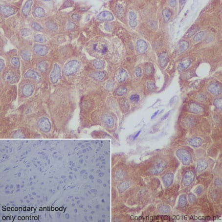 Immunohistochemistry (Formalin/PFA-fixed paraffin-embedded sections) - Anti-GCN2 antibody [EPR5970(2)] (ab134053)