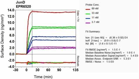 Other - Anti-JunD antibody [EPR6520] (ab134067)