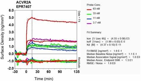 Other - Anti-Activin Receptor Type IIA/ACVR2A antibody [EPR7407] (ab134082)