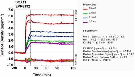 OI-RD Scanning - Anti-SOX11 antibody [EPR8192] (ab134107)