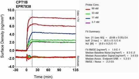Other - Anti-CPT1B antibody [EPR7838] (ab134135)
