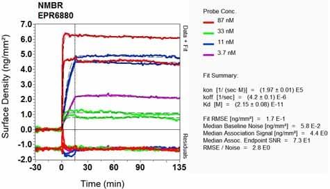 Other - Anti-NMBR antibody [EPR6880] (ab134141)