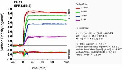 OI-RD Scanning - Anti-PDX1 antibody [EPR3358(2)] (ab134150)