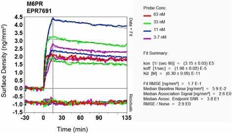 Other - Anti-M6PR (cation dependent) antibody [EPR7691] (ab134153)