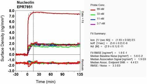 Other - Anti-Nucleolin antibody [EPR7951] (ab134164)