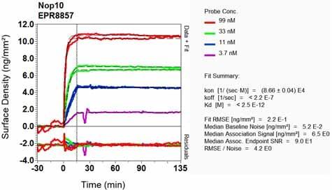 Other - Anti-NOP10 antibody [EPR8857] (ab134902)