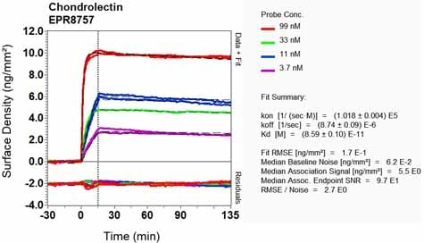 Other - Anti-CHODL antibody [EPR8757] (ab134924)