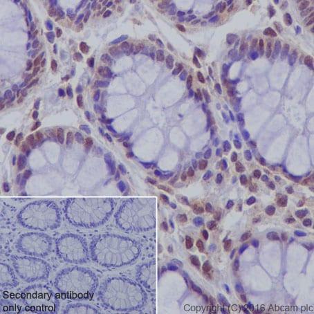 Immunohistochemistry (Formalin/PFA-fixed paraffin-embedded sections) - Anti-DPF2/REQ antibody [EPR9206(B)] (ab134942)