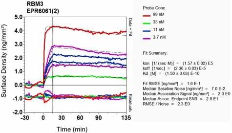 Other - Anti-RBM3 antibody [EPR6061(2)] (ab134946)