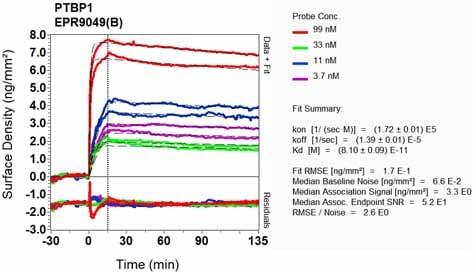 Other - Anti-PTBP1 antibody [EPR9049(B)] (ab134950)