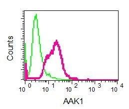 Flow Cytometry - Anti-AAK1 antibody [EPR5126(2)] (ab134971)