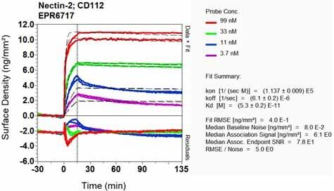Other - Anti-Nectin 2 antibody [EPR6717] (ab135246)
